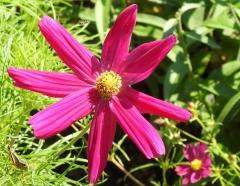 flower outside Butterfly Garden