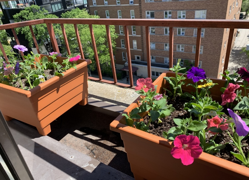 My Plant Balcony