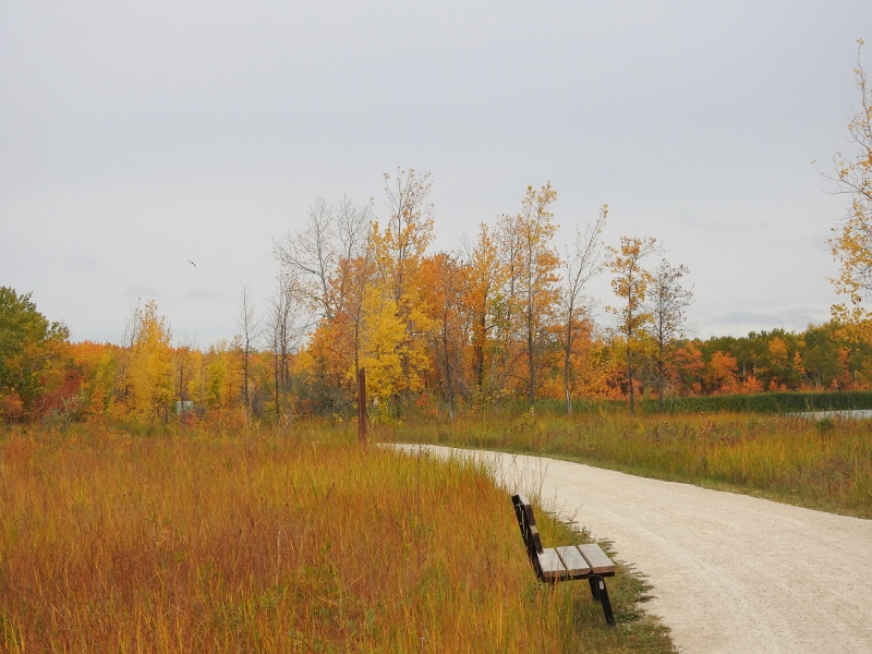 A Fall Morning at Fort WhyteAlive