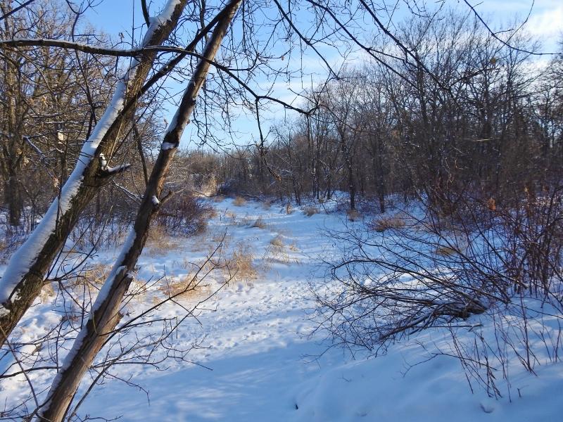 A Chilly Walk at Bunn'sCreek