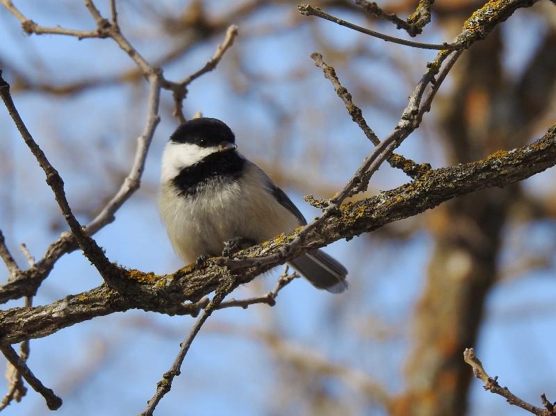 Last Stop Today – Bird's Hill ProvincialPark