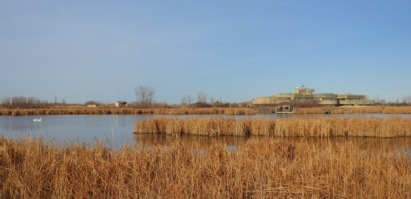 A Morning at Oak Hammock Marsh