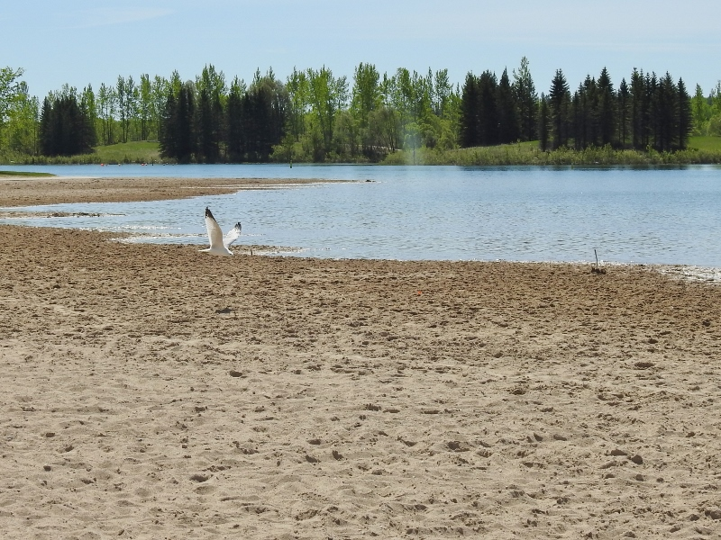 A Couple of Walks in Bird's Hill Provincial Park – part2